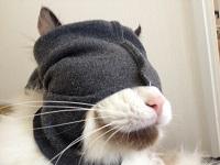 猫マスク前