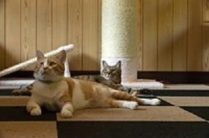 2匹の猫,爪とぎ