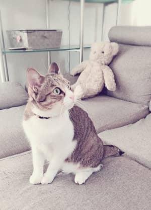 猫,ソファ-min