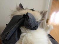 猫マスク後ろ