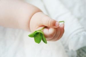 クローバーを握る赤ちゃんの手
