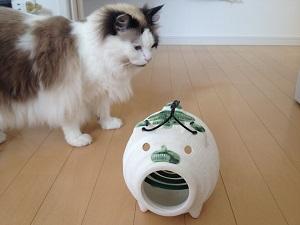 蚊取り線香に近づく猫