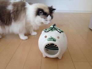蚊取り線香を匂う猫