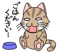 ご飯を欲しがる猫