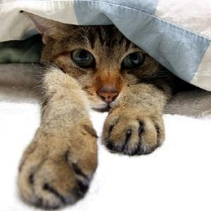 布団にもぐる猫