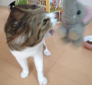 またたびをふりかけたおもちゃで遊ぶ猫