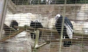 とべ動物園,とり