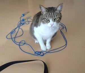 縄跳びの猫ホイホイに入る猫