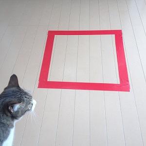 猫ホイホイを見つけた猫
