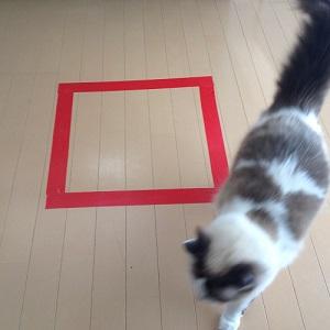 猫ホイホイを通り過ぎる猫