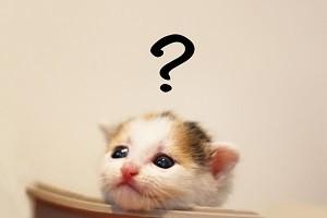猫,はてな