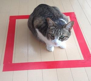 猫、転送完了