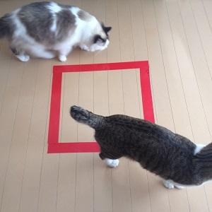 猫ホイホイと2匹の猫