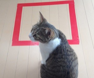 猫ホイホイを警戒する猫
