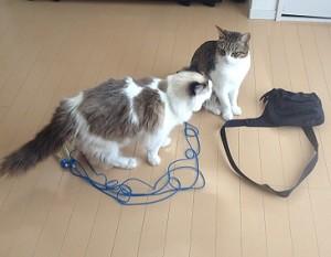 猫ホイホイ,縄跳びとバッグ,2匹の猫