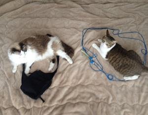 布団の上,2匹の猫ホイホイ
