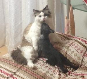新入り猫と先住猫