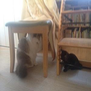 先住猫,新入り猫,威嚇