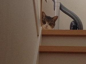 新入り猫を警戒する先住猫