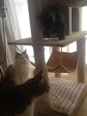 新入り猫と遊ぶ先住猫