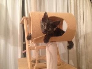 キャットタワーで遊ぶ新入り猫