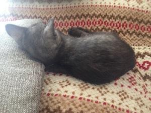 眠る新入り猫3