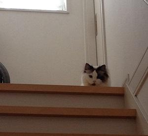 新入り猫の様子を見る先住猫