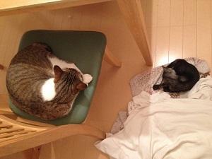 近くで寝る新入り猫と先住猫