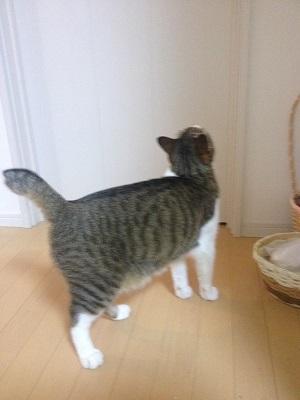 新入り猫の気配に気づく先住猫
