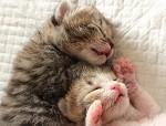 2匹の猫1