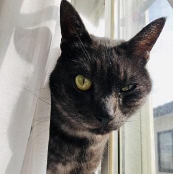 猫,片目が半開き-min