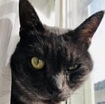猫,片目が半開き,1-min