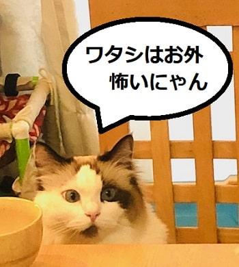 猫1-min