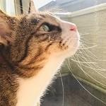 猫,網戸,-min