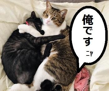 猫、網戸、破る、対策-min