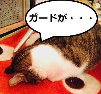 猫、網戸-min