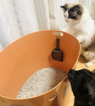 上から猫トイレに猫砂を入れる