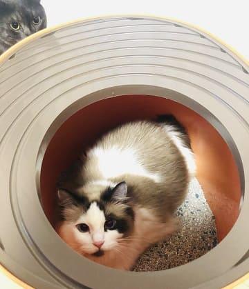 上から猫トイレの蓋をする