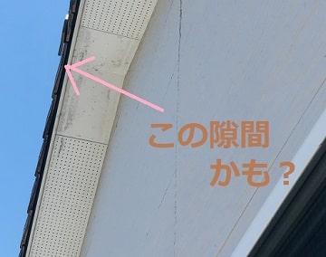 瓦の隙間にコウモリの可能性