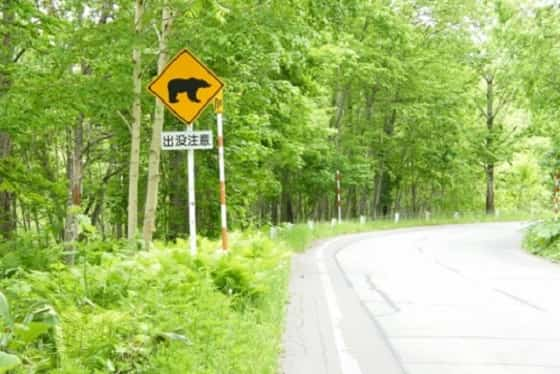 クマ,走る速さ