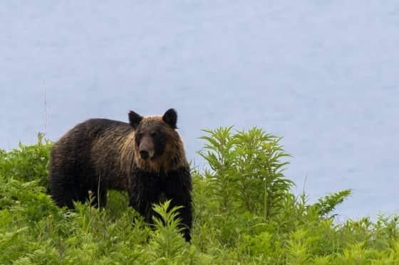 熊に遭遇したら,対処法