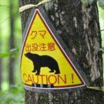 熊の走るスピード