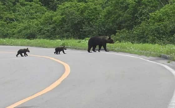 熊の走る速度