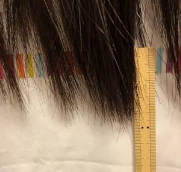 ヘアアクセルレーター,1か月で伸びた長さ