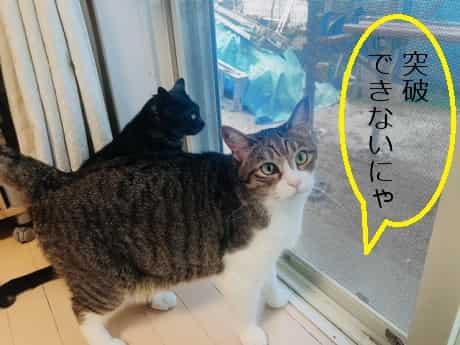 猫,ペット用網戸で脱走防止